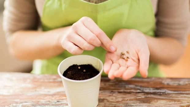 высаживание растения в горщок
