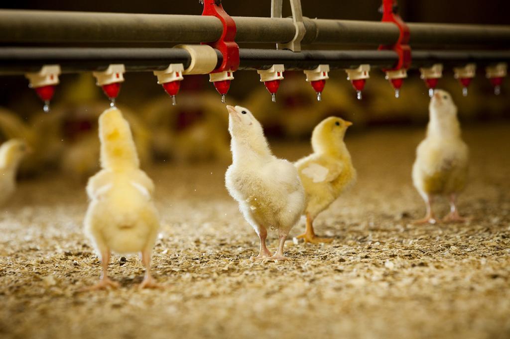 бизнес планы овощеводства